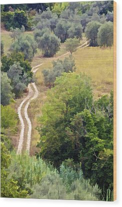 Country Road Of Tuscany Wood Print by David Letts