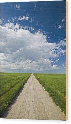 Country Road Through Grain Fields Wood Print by Dave Reede