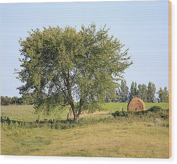 Wood Print featuring the photograph Country Scene by Penny Meyers