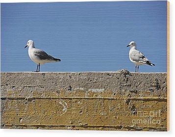 Couple Of Seagulls On A Wall Wood Print by Sami Sarkis