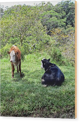 Wood Print featuring the photograph Cow 4 by Dawn Eshelman