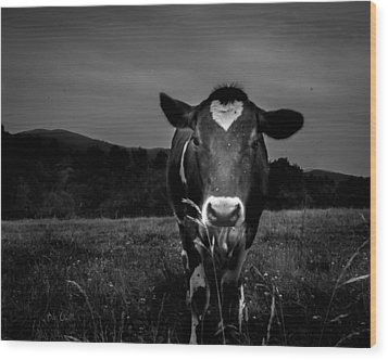 Cow Wood Print by Bob Orsillo