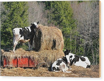 Cow Country Buffet Wood Print by Christina Rollo