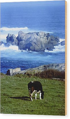 Cow Grazing By The Ocean Wood Print