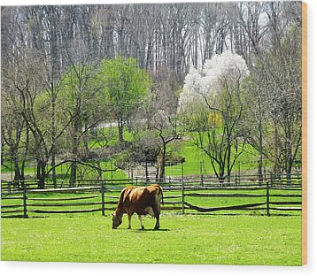 Cow Grazing In Pasture In Spring Wood Print by Susan Savad