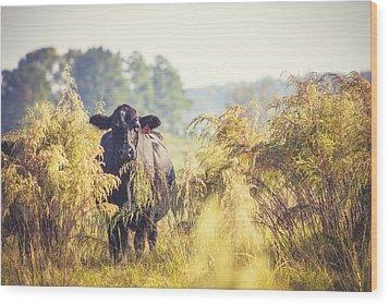 Cow Hiding In The Weeds Wood Print by Karen Broemmelsick