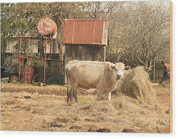 Cow In The Pen Wood Print