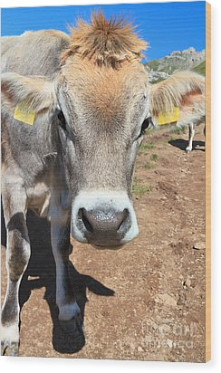 Cow On Alpine Pasture Wood Print