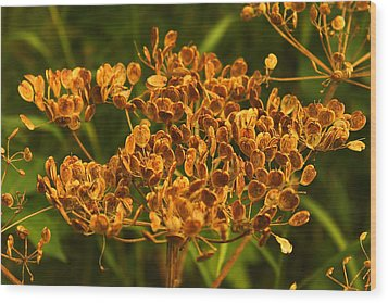 Wood Print featuring the photograph Cow Parsnip Seeds by Sandra Foster