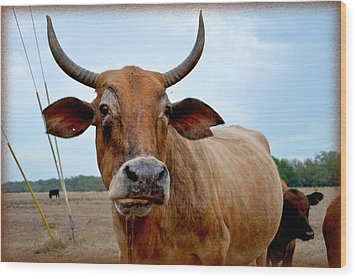 Wood Print featuring the photograph Cow Photo 1 by Amanda Vouglas