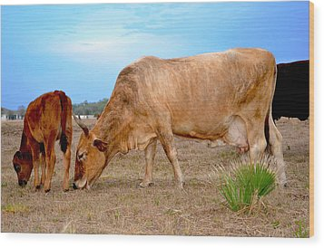 Wood Print featuring the photograph Cow Photo 2 by Amanda Vouglas