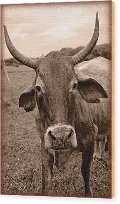 Wood Print featuring the photograph Cow Photo 5 by Amanda Vouglas