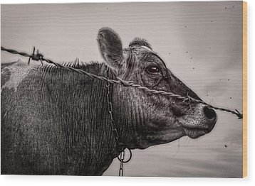 Wood Print featuring the photograph Cow With Flies by Bob Orsillo