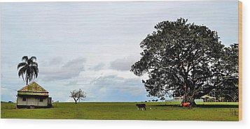 Cows And Shack - Australia Wood Print