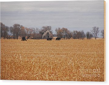 Wood Print featuring the photograph Cows In The Corn by Mary Carol Story