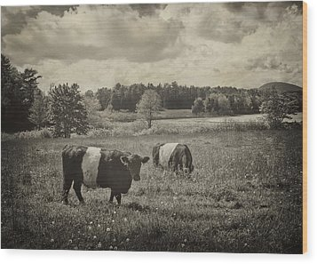 Cows Rockport Maine Wood Print