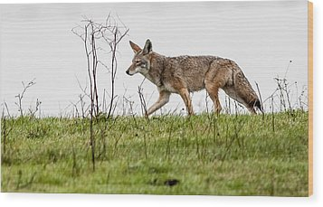 Coyote Wood Print by Brian Williamson
