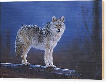 Coyote Standing On Log Alaska Wildlife Wood Print by Doug Lindstrand