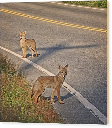 Wood Print featuring the photograph Coyotes At The Crossroads by Peggy Collins