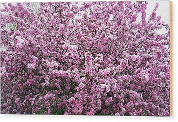 Crab Apple Tree Wood Print