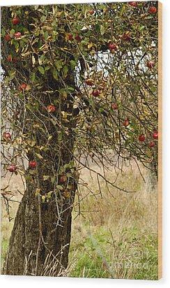 Crab Apples Wood Print by Nicki McManus