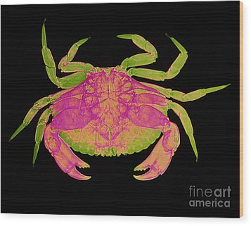 Crab Wood Print by D Roberts