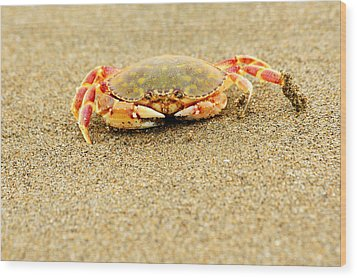 Crab Walk Wood Print by Rebecca Adams