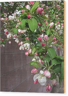 Crabapple Blossoms And Wall Wood Print by Donald S Hall