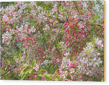 Crabapple Blossoms Wood Print by Karen Molenaar Terrell