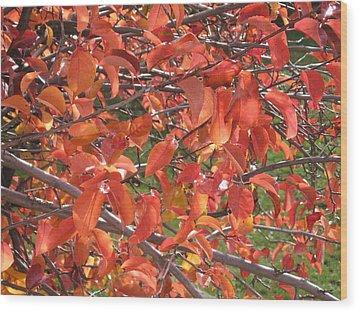 Crabapple Wood Print by Kimberly Maxwell Grantier