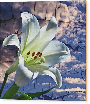 Wood Print featuring the photograph Cracked Paint Easter Lily by Marjorie Imbeau