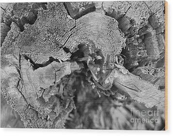 Cracking Wood Print by Susan Hernandez