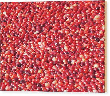 Wood Print featuring the photograph Cranberries by Jodi Terracina