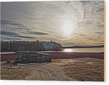Cranberry Bog Winter Of 2012 Wood Print by Frank Winters