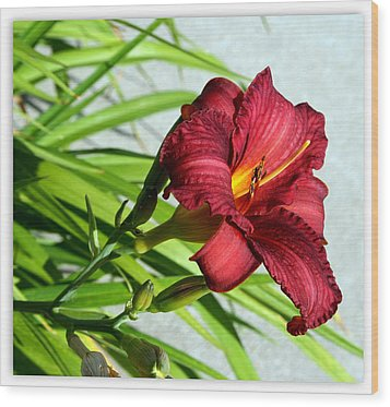 Cranberry Colored Lily Wood Print by Kay Novy