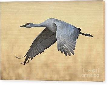 Crane Over Golden Field Wood Print by Bryan Keil