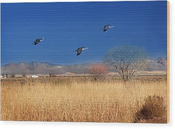 Wood Print featuring the photograph Cranes In Flight by Barbara Manis