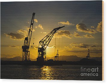 Cranes In The Sunset Wood Print by David Hill