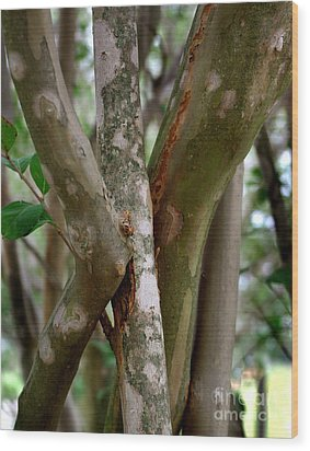 Wood Print featuring the photograph Crape Myrtle Branches by Peter Piatt