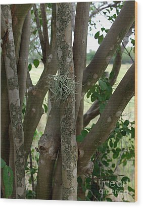 Wood Print featuring the photograph Crape Myrtle Growth Ball by Peter Piatt