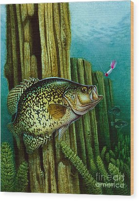 Crappie And Posts Wood Print by Jon Q Wright
