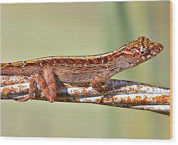 Wood Print featuring the photograph Crawling Lizard by Cyril Maza