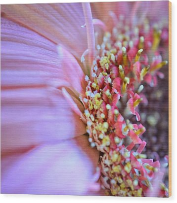 Wood Print featuring the photograph Crazy Enough by Penni D'Aulerio