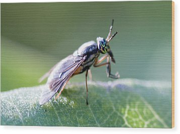 Crazy-eyed Fly Wood Print