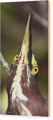 Crazy Eyes Wood Print by Bruce J Robinson