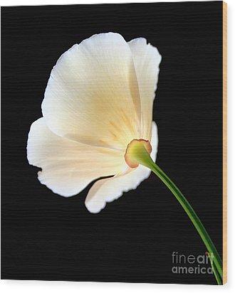 Cream Poppy Glow Wood Print