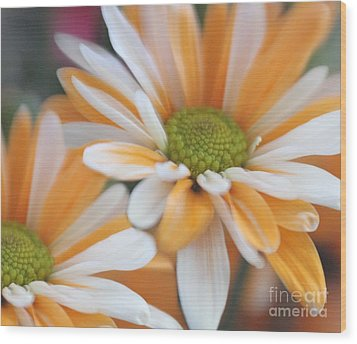 Wood Print featuring the photograph Creamsicle Daisies by Mary Lou Chmura