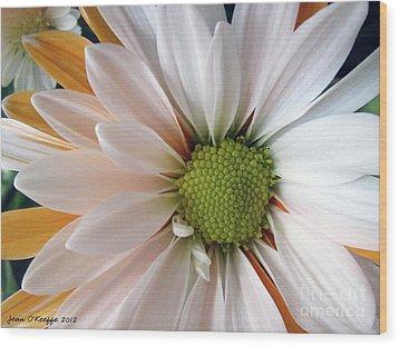 Wood Print featuring the photograph Creamsicle by Jean OKeeffe Macro Abundance Art