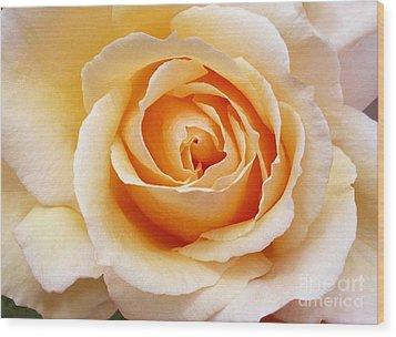 Creamy Orange Rose Blossom Wood Print by Paul Clinkunbroomer