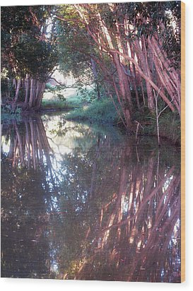 Creek Magic Wood Print
